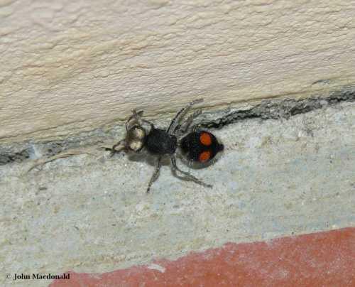 Odd Ant 2