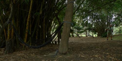 P1610505 bamboo y hammock y john
