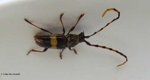 Odd bug 3