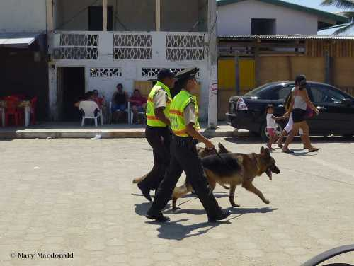Police with dogs