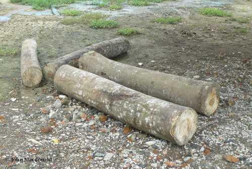 Rough logs