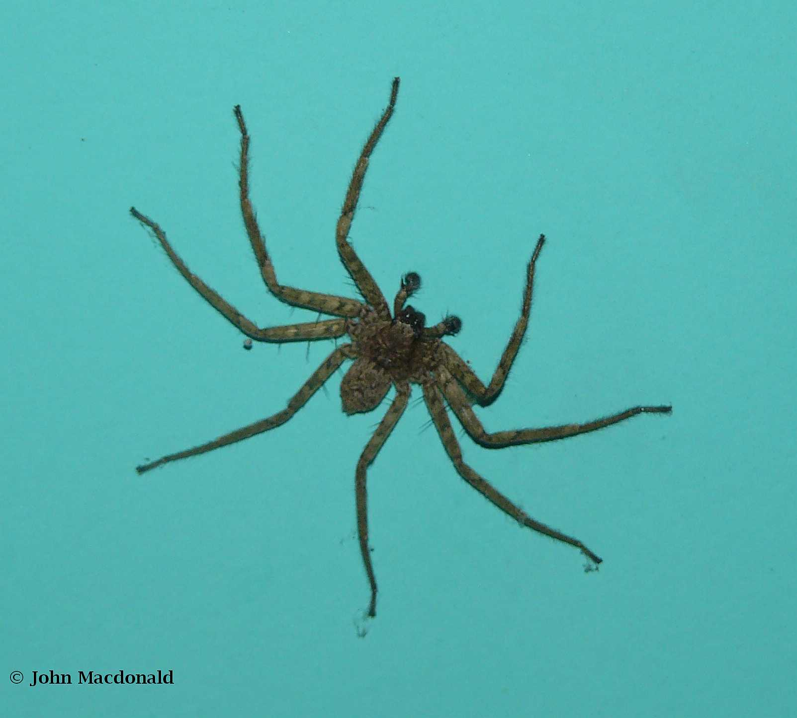 After a brief lull the rains have returned living it for How to keep spiders out of your bedroom