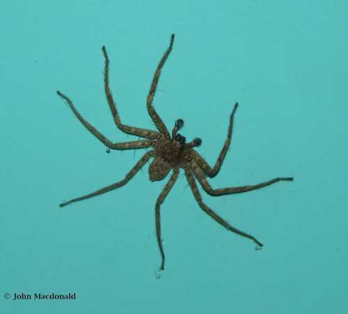 Spider Driven Inside