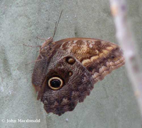 Big Moth 2