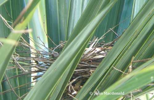 Bird's nest 2