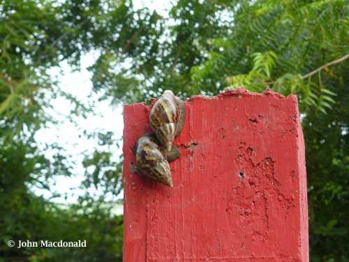 Snail race 1
