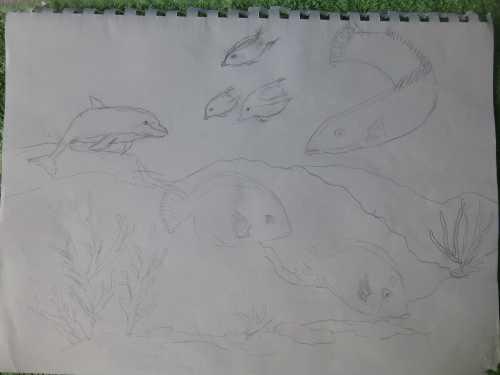 reef rough sketch