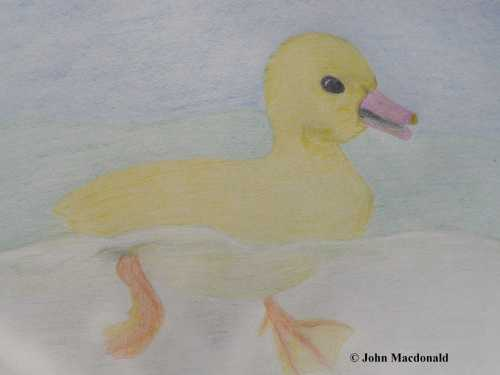 Duckling Drawing