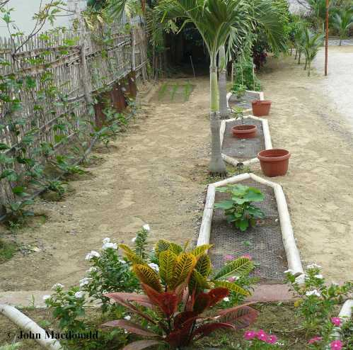 Garden 11-26