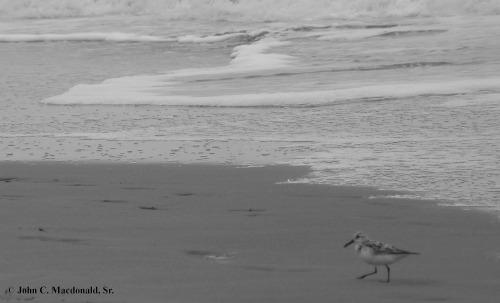Sandpiper 1